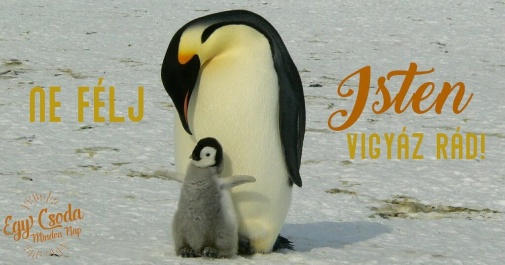2019-05-12 penguins-429134_1280-min